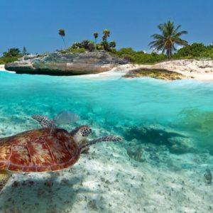 Terrestre Aruba